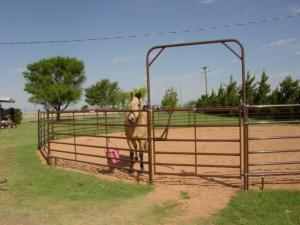 Besides the barn we have outside Priefert panel pens and a 55' round pen  available.